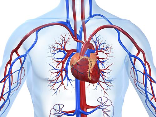 10 cholesterolio sveikatos širdies nepakankamumas oris yra hipertenzija