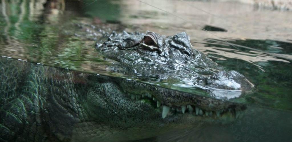 Zimbabvėje krokodilui užblokavus įėjimą į ligoninę kilo panika