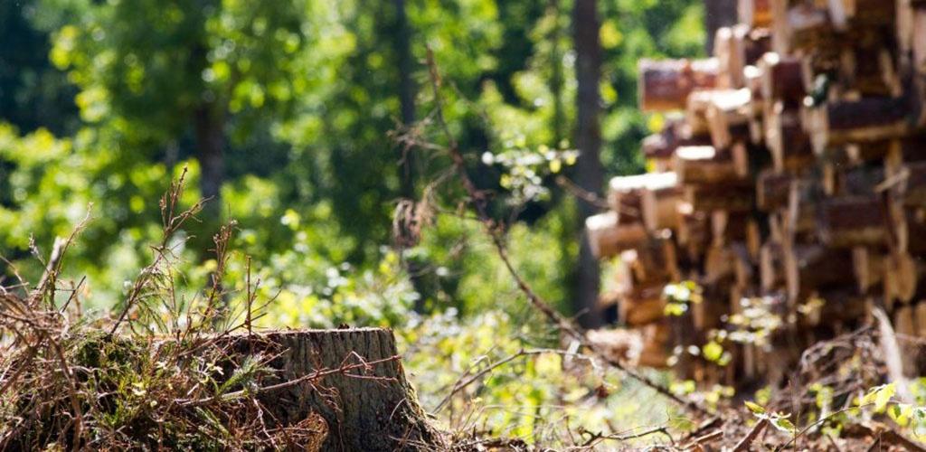 Seimas spręs, ar saugomose teritorijose drausti plynuosius kirtimus
