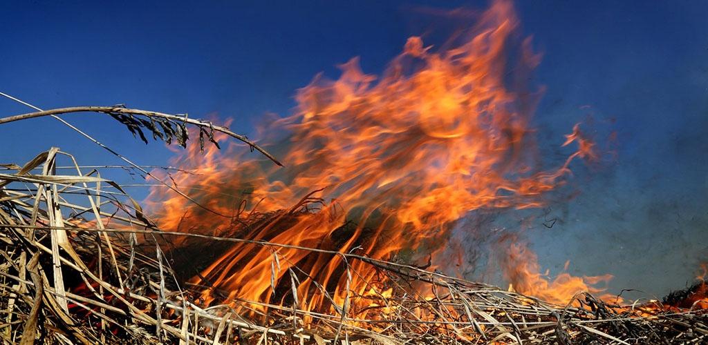 Lietuvoje stipriai dega pernykštė žolė, Panevėžyje išdegė 45 hektarai