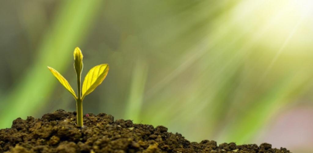 Daugėja norinčių ekologiškai ūkininkauti