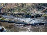 Kaune žadama ieškoti priemonių mažinti mieste tekančių upelių taršą