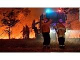 Australijoje gaisrai nusiaubė penktadalį žemyno miškų, sako tyrėjai