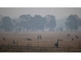 Nepaisant potvynių, Australijoje kelerius metus trukusi sausra dar nesibaigė